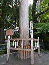 1609suwataisha20s