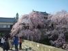 Sakura2019_1